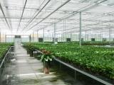 新疆温室,新疆温室大棚建设