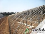 九合农业钢架温室大棚