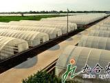 九合农业全钢架拱棚