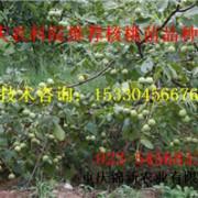 重庆锦新农业有限公司的形象照片
