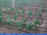 温室大棚滴灌水肥一体化实施方案
