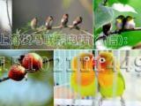 百鸟展览各种鸟类出租珍禽展览活动案例