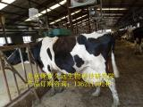 奶牛饲料2.5%奶牛专用预混料