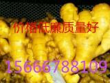 今日生姜的销售价格