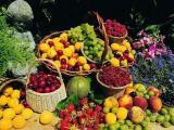 进口水果代理-大连进口水果报关清关费用