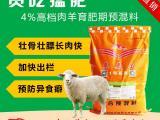 农户分享育肥羊的养殖方法 促生长的育肥羊饲料