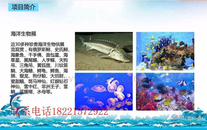 房地产活动海洋展主题布置出租海洋生物展览租赁
