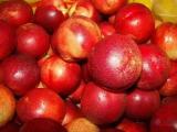 油桃种植基地今日油桃报价