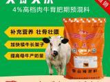 肉牛吃什么饲料长的快  肉牛快速出栏饲料