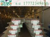 鹌鹑采食器 养殖设备 鹌鹑食槽 鹌鹑料槽 鹌鹑自动采食器