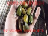 橄榄核肉分离机