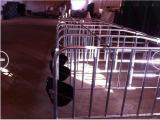 优质的母猪限位栏价格 猪舍专用定位栏厂家 猪定位尺寸 鹏翔