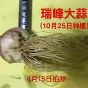 济宁瑞峰农业科技有限公司的形象照片