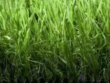 人造草坪材料生产|足球场人造草坪|绿昂体育