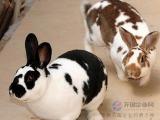 兔用大蒜素厂家 兔用大蒜素价格