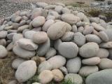 人工湖护坡专用鹅卵石出售