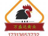 彭州瑶鸡苗养殖技术