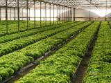 蔬菜大棚出租,上海新建蔬菜大棚出租,钢架温室大棚