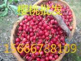 樱桃热销至今日樱桃批发价格