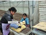 育苗播种机 育苗生产线 泡沫育苗播种机 泡沫点籽机