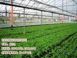 智能蔬菜温室,现代化肉鸡养殖大棚