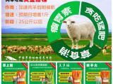 中国养殖网推荐 羊养殖管理