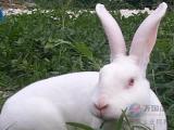 獭兔饲料厂家 獭兔专用预混料饲料