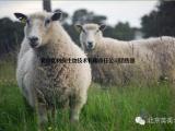 肉羊饲料科学配制与应用 养羊吃什么饲料