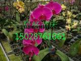 移动苗床在温室养花育苗中的应用