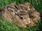 种兔预混料价格 种母兔预混料厂家