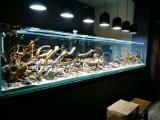餐厅定制超白鱼缸沉木造景水族箱