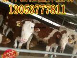 养肉牛国家有没有补贴