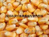 汉江养殖长期求购玉米小麦高粱油菜籽黑豆等原料