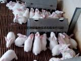 种母兔饲料的推荐 行业领先的种母兔饲料