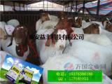 羊用益生菌厂家直销