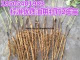 生态效益的木本油料林木种苗花卉油用牡丹种苗