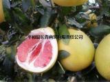 大量供应柚子批发红心柚子三红蜜柚柚子苗果园直发