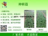 农业种植微生物菌|生根防病|土壤改良