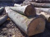 非洲原木板材进口报关全套代理公司值得信赖
