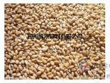 四川纵翔饲料厂常年现金收购小麦、玉米、大米等原料