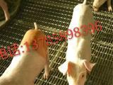 养殖轧花网 养猪轧花网 镀锌轧花网 安平县航超轧花网