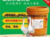 大白鹅吃什么催肥 鹅催肥添加剂