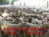 羊吃塑料袋咋回事羊预混料