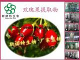 玫瑰果提取物粉 抗氧化 厂家直销