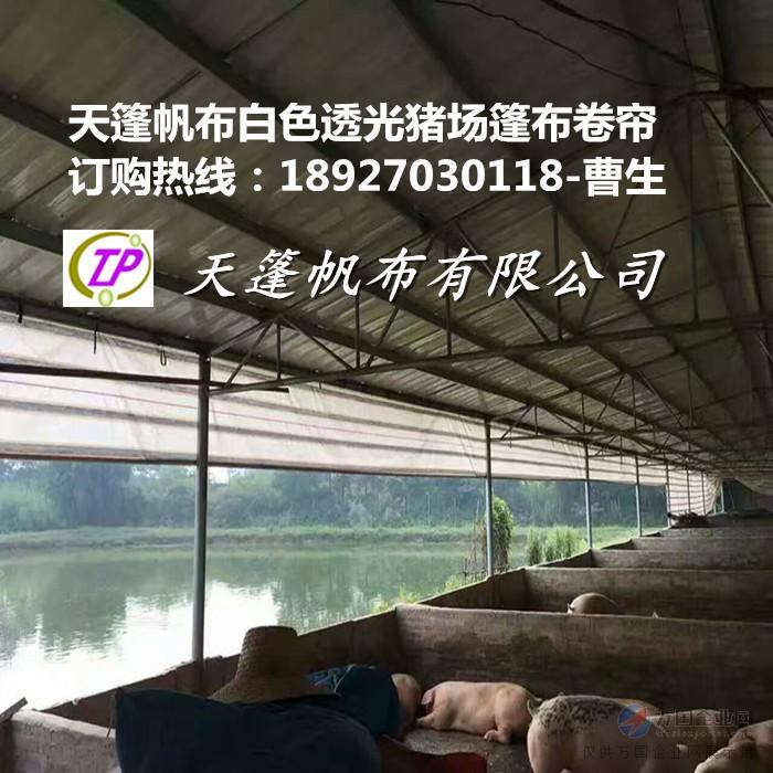 工农业塑料制品 03  大棚养猪场卷帘布设计图      棚舍:这种猪舍
