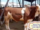 三个月肉牛苗市场价格