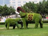 仿真植物大自然景观雕塑 拉丝玻璃钢雕塑