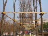 树木支撑杆 树木支架低价促销
