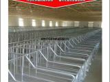 母猪定位栏 限位栏料线养殖设备