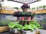 成都家庭农场设计施工-家庭种菜就找尚鼎丰帮您